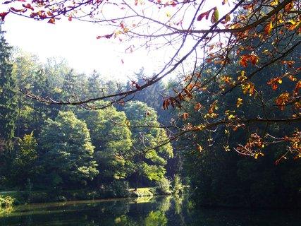 FOTKA - nedělní procházka lesem - zlatavé listí kaštanu nad hladinou