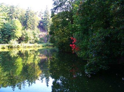 FOTKA - cestou z lesa - rybník