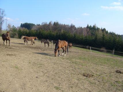 FOTKA - U koní