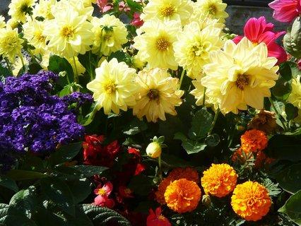 FOTKA - opět kytky...
