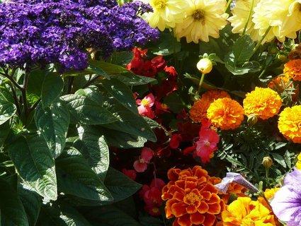 FOTKA - opět kytky....