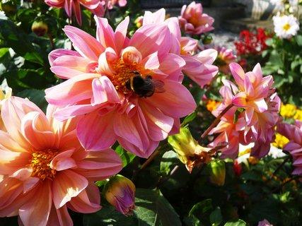 FOTKA - opět kytky......