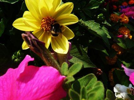FOTKA - opět kytky,,,,