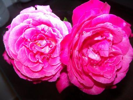 FOTKA - květiny ** **
