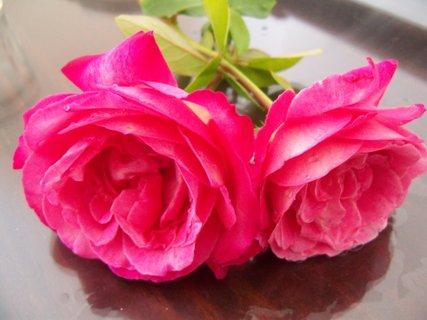 FOTKA - květiny ** ** **