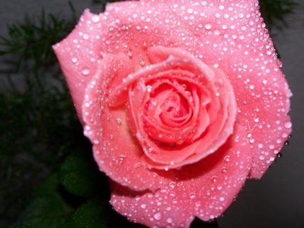 FOTKA - květiny ** ** ** **