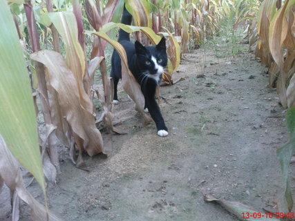 FOTKA - v kukuřici na procházce
