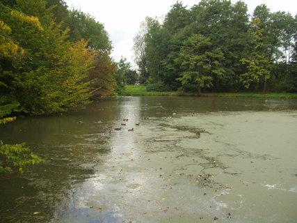 FOTKA - Krajina s rybníkem 7