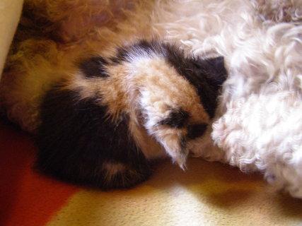 FOTKA - kotě s náhradní mamkou