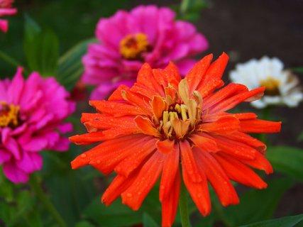 FOTKA - ranní procházka - květiny