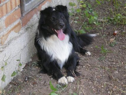 FOTKA - pes Rocky