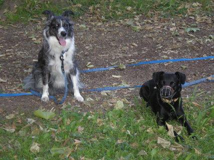 FOTKA - Bessy a její kamarád Míša