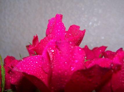 FOTKA - květiny ***** ** *