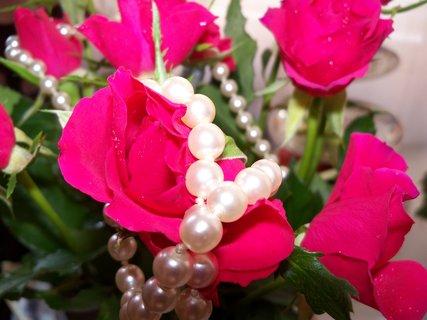 FOTKA - květiny ** * **