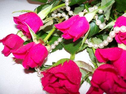 FOTKA - květiny ** ** ** * * *