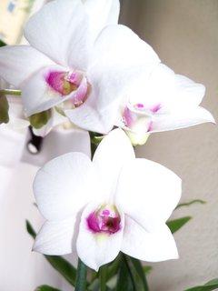 FOTKA - květiny ** * ** ***