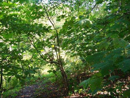 FOTKA - Kunratický les - procházka,,.,,.,,,