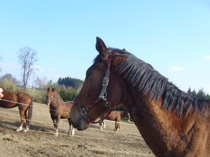 FOTKA - U koní....