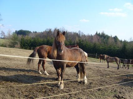 FOTKA - U koní.......