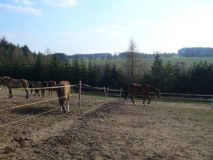 FOTKA - U koní........