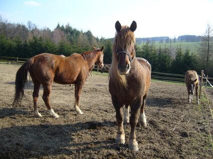 FOTKA - U koní,
