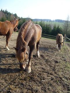 FOTKA - U koní.........
