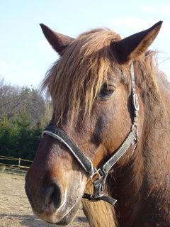 FOTKA - U koní,,,,