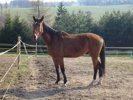 FOTKA - U koní,,,,,,