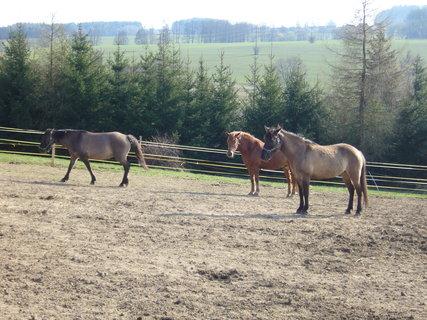 FOTKA - U koní.,