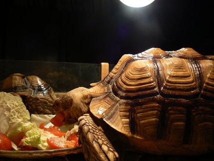 FOTKA - želvy2