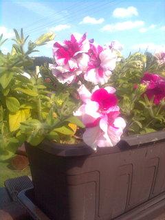 FOTKA - Zahrada............*