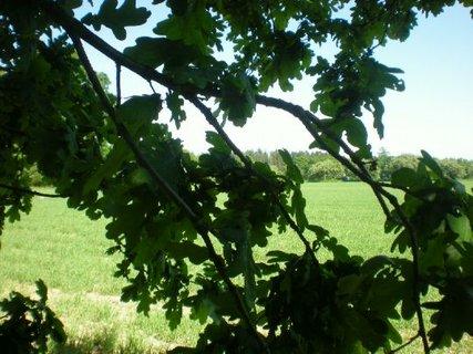 FOTKA - Pole přes větev dubu