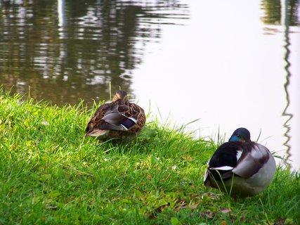 FOTKA - dopoledne u rybníka Ohrada - odpočinek..