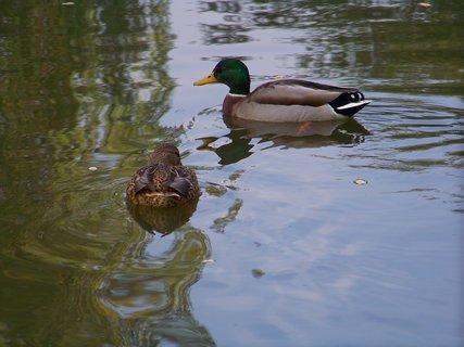 FOTKA - kačenky na rybníce.....