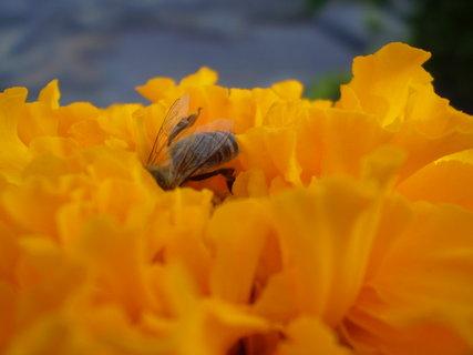 FOTKA - Ze zahrady III