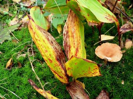 FOTKA - Krásně zbarvený podzim