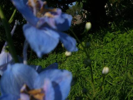 FOTKA - modrá
