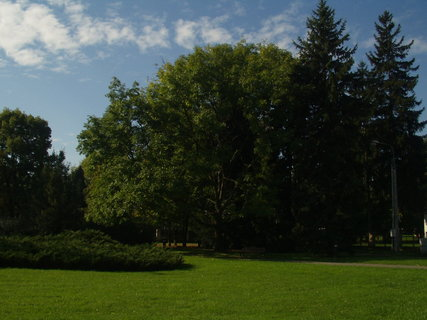 FOTKA - Zeleň v parku