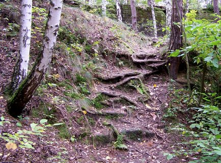FOTKA - Schody z kořenů stromu