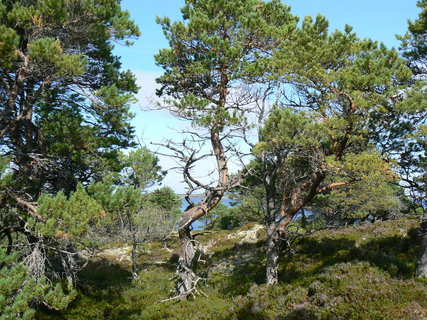 FOTKA - Norsko,20