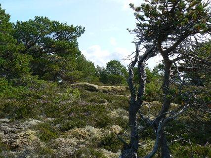 FOTKA - Norsko,21