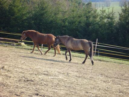 FOTKA - U koní.,,,