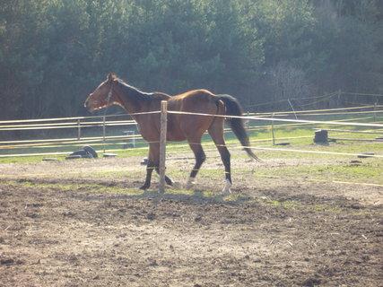 FOTKA - U koní.,,,,