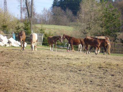 FOTKA - U koní.,,,,,