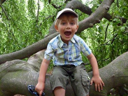 FOTKA - Na stromě