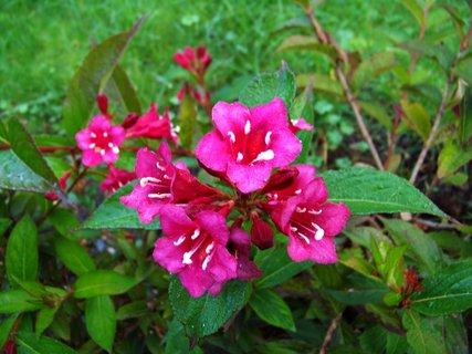 FOTKA - procházka - květy...