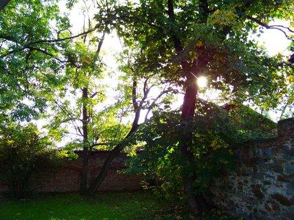 FOTKA - sluníčko ve stromech .,,,,,