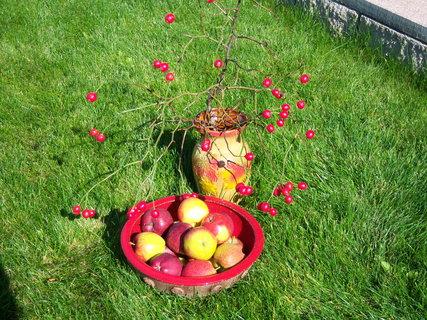 FOTKA - Zátiší s jablíčky