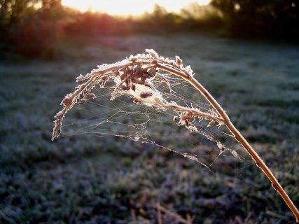 FOTKA - Nedělní mrazivé jitro