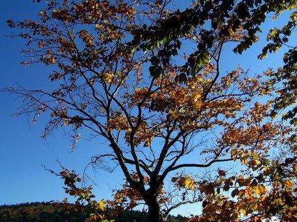 FOTKA - Zlatavý podzim